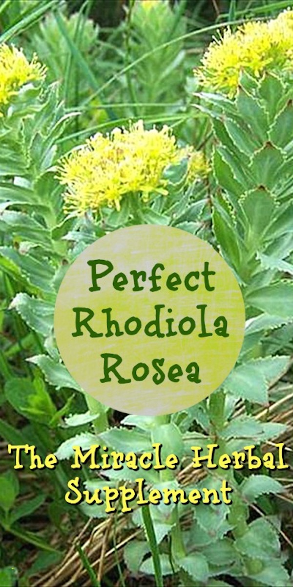 Perfect Rhodiola Rosea The Miracle Herbal Supplement