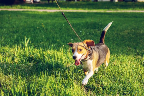 How much more active are dog owners?