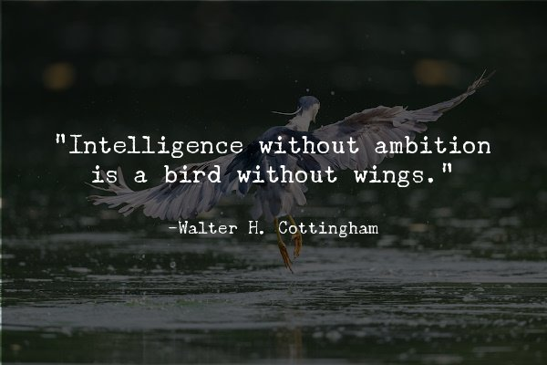 """""""Intelligence without ambition is a bird without wings.""""―Walter H. Cottingham"""